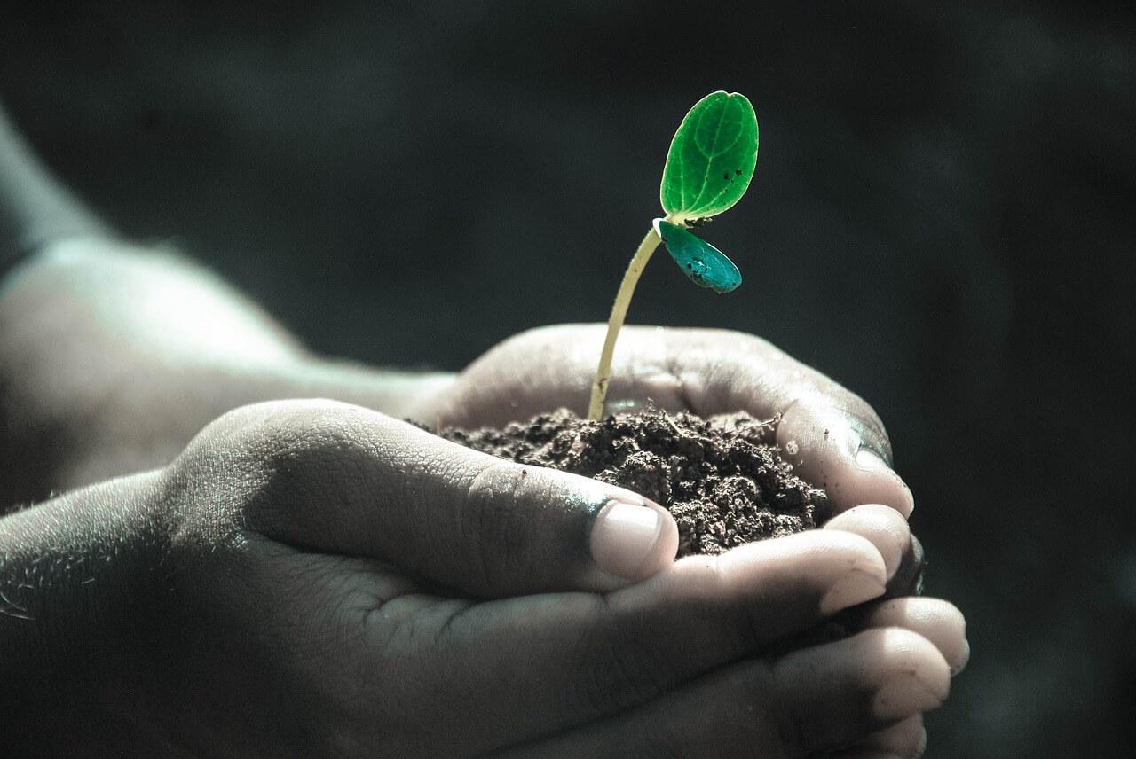 Rのバージョン3.6.0のコードネームは Planting of a Tree(木を植えること)である